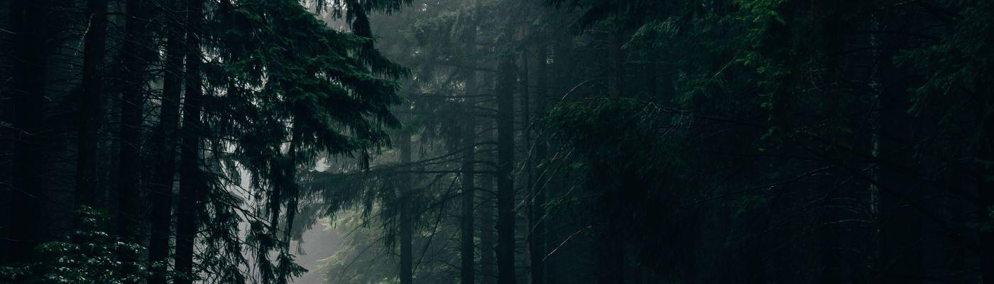 petrichor odeur de la pluie